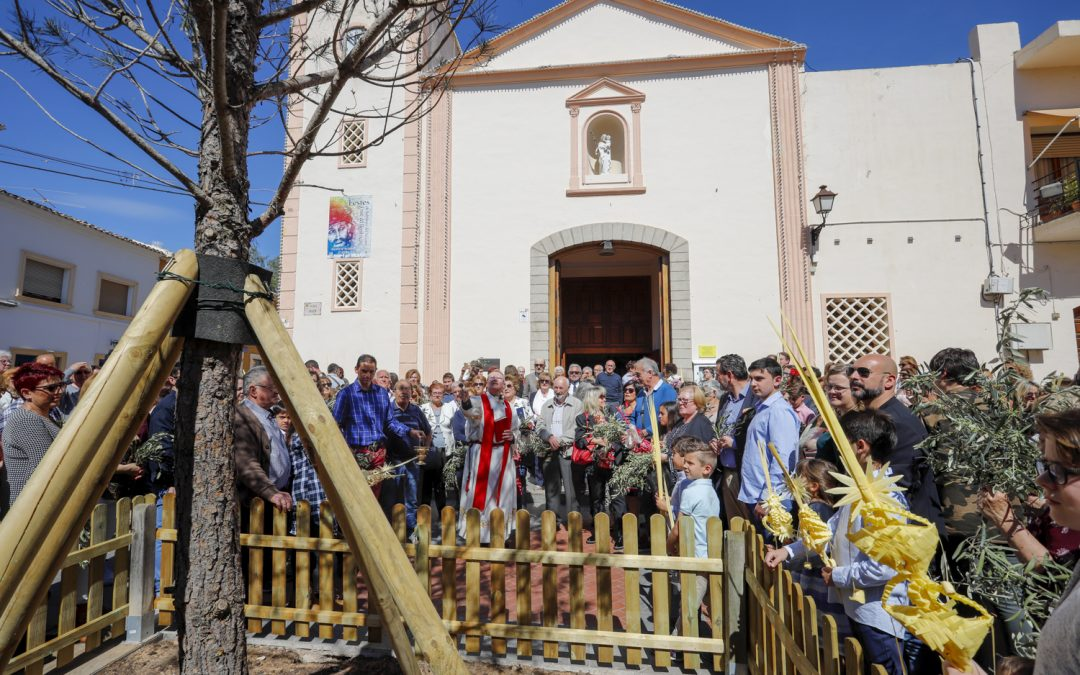 L'Alfas del Pi blesses its new emblematic pine tree