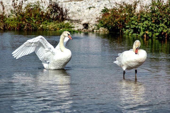 Ruta por el Río Algar – Día Mundial de las Aves